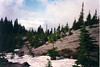 AT TIMBERLINE<br /> We're out of the main wooded area now and heading up into the subalpine region, noted by the presence of the really pointed trees, the subalpine firs. It'll start to thin out more and more now.