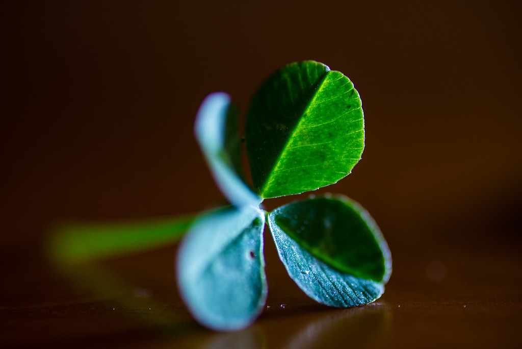 This is for a photography class - E found me a 4 leaf clover to photograph.