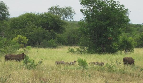Mozambique & Africa 2013
