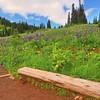 Tipsoo Lake area wildflowers 1