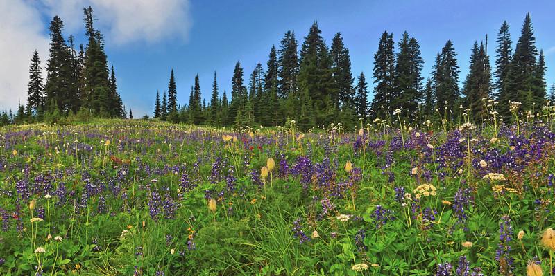 Tipsoo Lake wildflowers 3