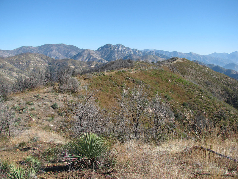 looking across  the ridge to mt Sally.