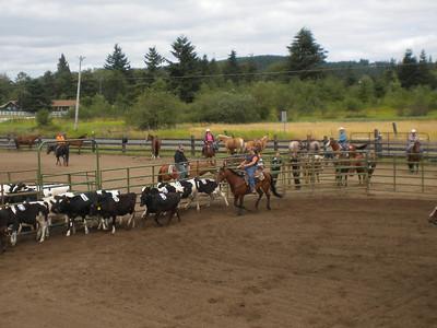 Murphy First Cow Sort 8.14.11
