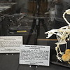 Skeletons Display Case 1