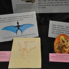 Pterosaur reproduction display items, including replica of _Pterodactylus_ and enlarged restoration of a pterosaur embryo in its egg.