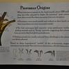 Pterosaur origins.