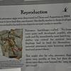 Pterosaur reproduction sign.