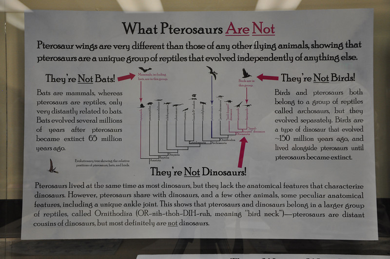 Correction popular misconceptions about pterosaurs.