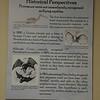 Erroneous, historical ideas about pterosaurs.