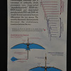 "The evolutionary relationships and basic anatomies of the two main ""types"" of pterosaurs,"