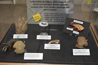 Claws and hooves display