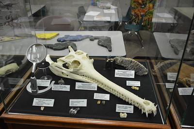 Third impressive animal teeth display