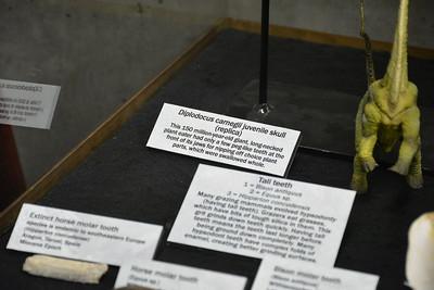 Diplodocus skull label