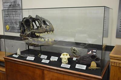 Animals with impressive teeth display