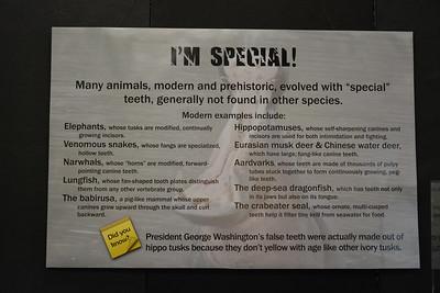 Unusual teeth sign