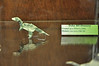14a - Dollar Allosaurus