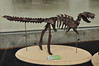 9b - Origami Tyrannosaurus Skeleton