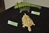11a - Origami Ankylosaurs 1