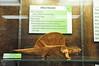 12a - Origami Dimetrodon & Dimetrodon Sign