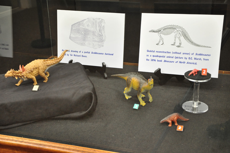 Models depicting different, historical ideas about what _Scelidosaurus_ looked like in life.