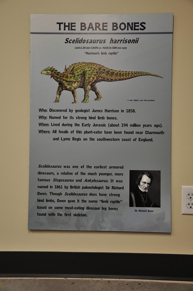Introductory sign about _Scelidosaurus_.