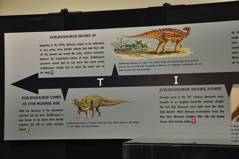 End of the timeline of historical ideas about _Scelidosaurus_.