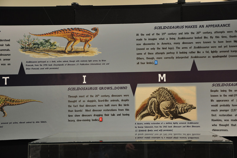 Middle of the timeline of historical ideas about _Scelidosaurus_.