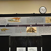Timeline of historical ideas about _Scelidosaurus_.