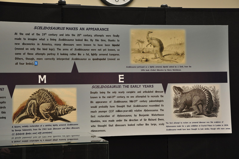 Beginning of the timeline of historical ideas about _Scelidosaurus_.
