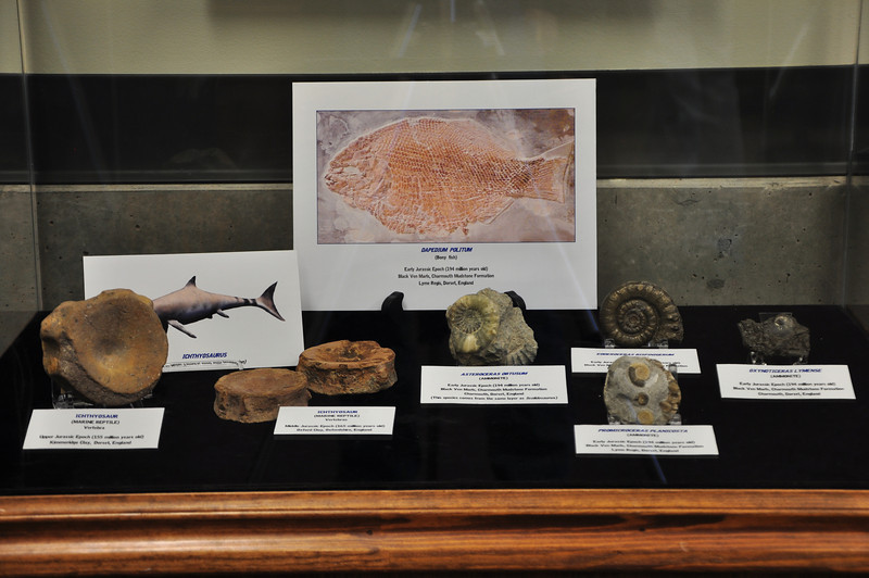 Other fossils from same rock unit that produced _Scelidosaurus_ fossils.