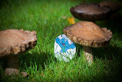 Mushrooms, September 8, 2010