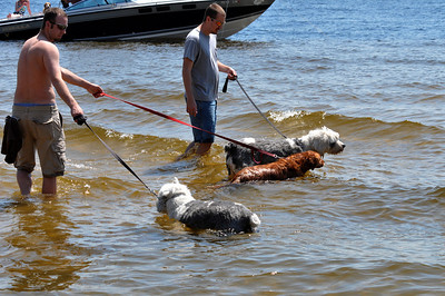The dogs cool off