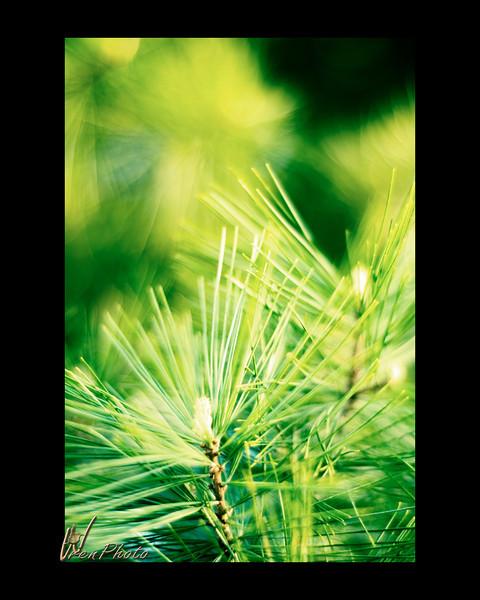 Day 02: Pine Needles