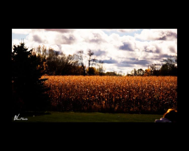 Day 160: Corn field