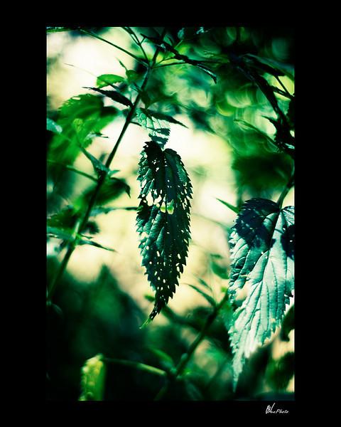 Day 063: Holey Leaf