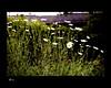 Day 041: Wild Flowers