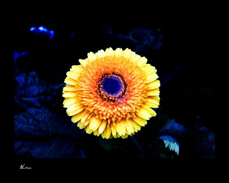 Day 031: Yellow Flower