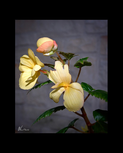 Day 137: Vicky's Flowers