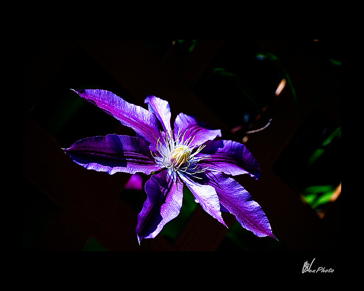 Day 106: Purple Loveliness (Clematis)<br /> <br /> Again, I am not a flower person, at least when it comes to growing them. I do enjoy seeing them in their natural habitat. That would be in the yards of my neighbors & friends.<br /> <br /> This one is from the yard of my friend, Linda, who definitely has a knack for growing all sorts of beauties.