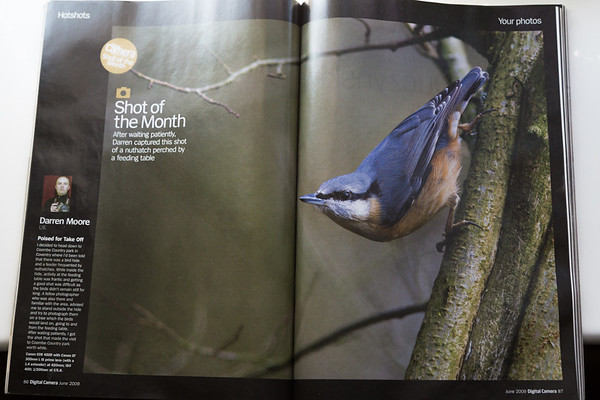 NUTHATCH - COOMBE COUNTRY PARK