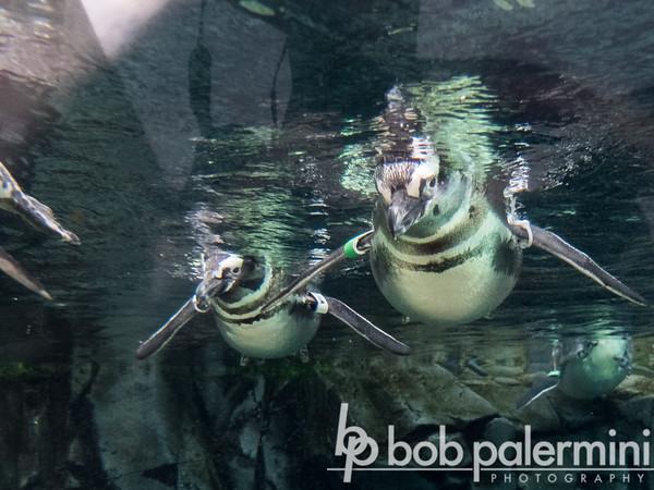 Aquarium of the Pacific, Long Beach, CA