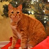 Winston's Official Holiday 2011 Photo