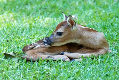 Cute little baby deer...Awwwww!!!