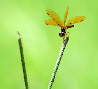 Dragonfly on a weed!