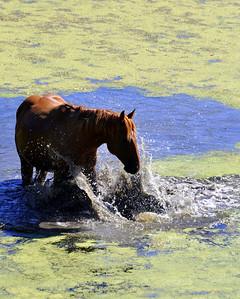 The horse splashing before its bath!