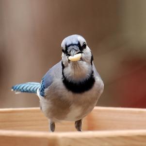 Anyone care for a peanut???