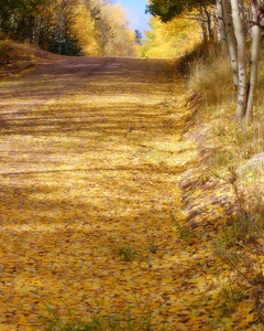Yellow leaf road!!