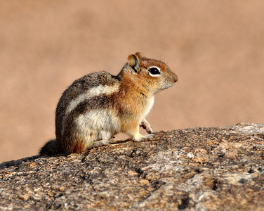 Chipmunks are so adorable!  I had a bunch more shots of the mountain goats...but I was scared you all may be tired of looking at the goats.. So I thought I would post this little cutie instead!
