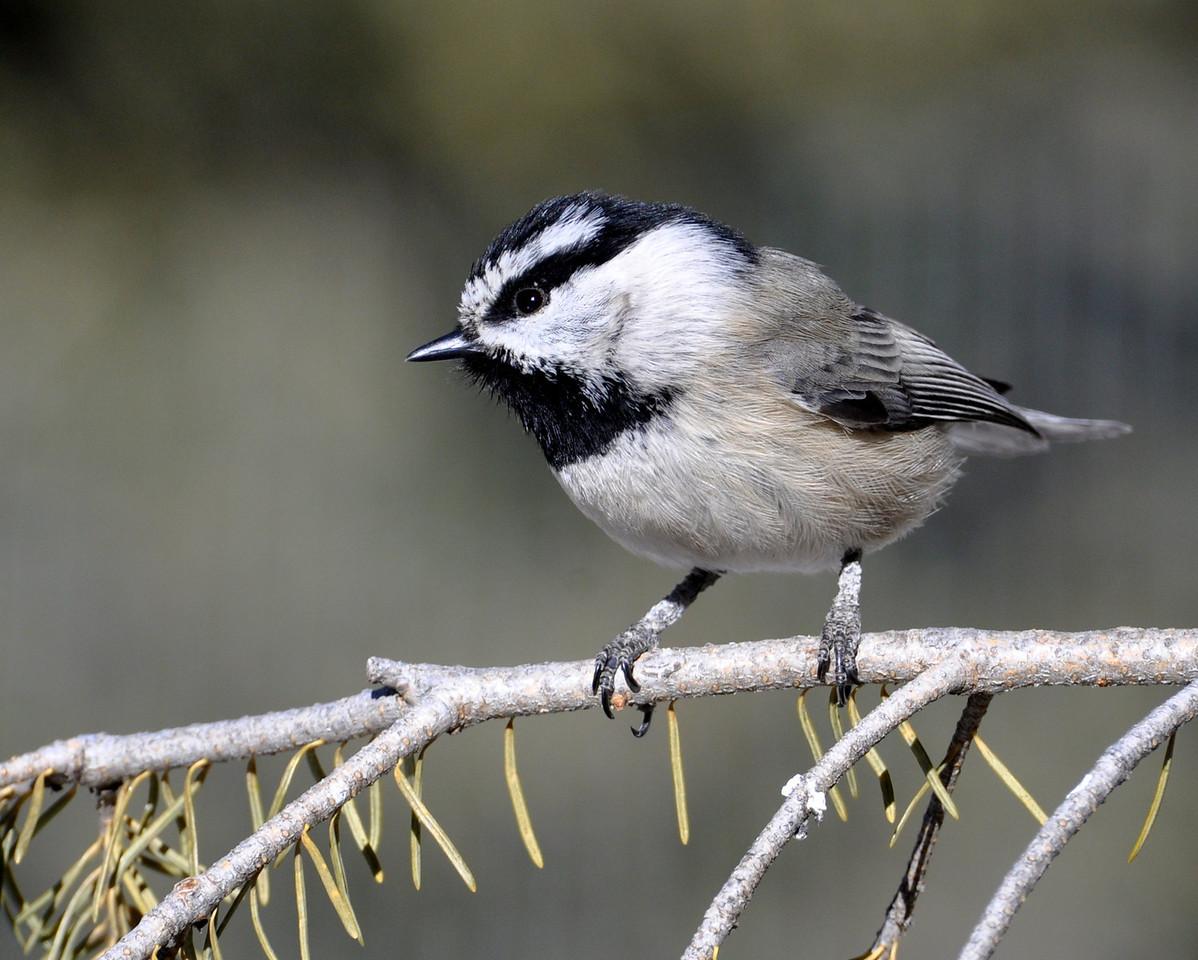 Another cute little bird!