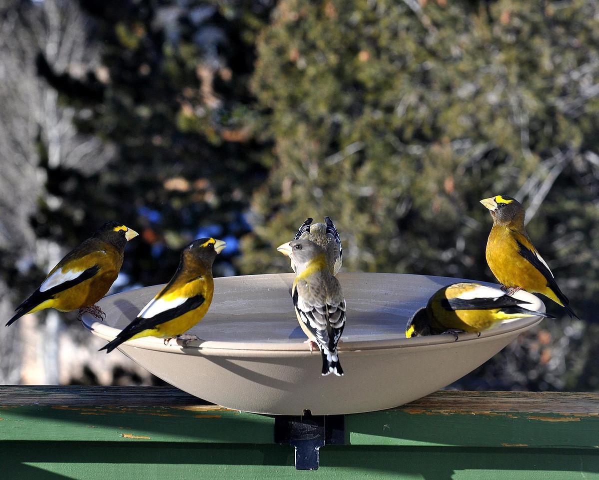 Some thirsty birds!